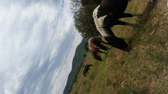 Bingara, Australia: Jackaroo Jillaroo Downunder