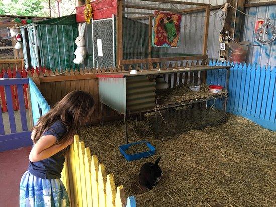 Pemberton, Australien: Family friendly farm