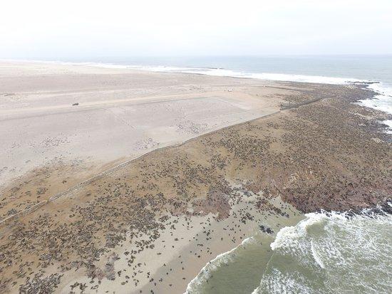 Skeleton Coast Park, Namibië: Seal colony