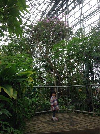Yume no Shima Tropical Greenhouse Dome: 雨の日や寒い日など、非現実感が味わえてこどもからお年寄りまで楽しめます。 娘は、ジャングルを探検しているようで滝の下を通るトンネルを何度も行ったり来たり楽しんでいました。 熱帯の大きく成長した