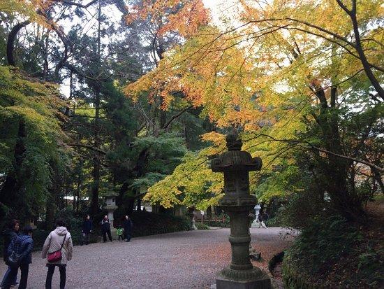 Katori, Japan: 紅葉の参道