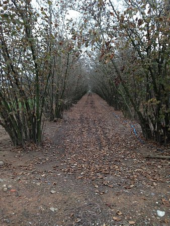 Foto de La Selva del Camp