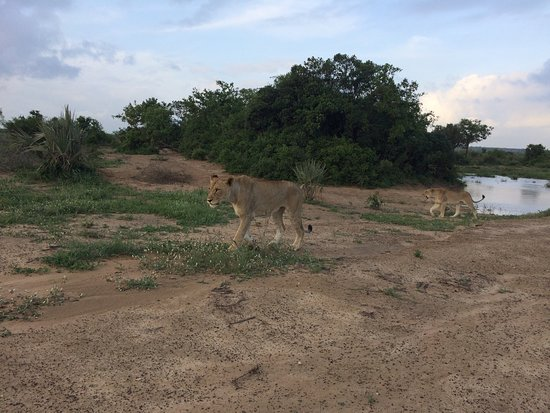 Phinda Private Game Reserve, África do Sul: photo2.jpg