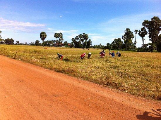 Active Travel Asia: Phnom Penh rice field