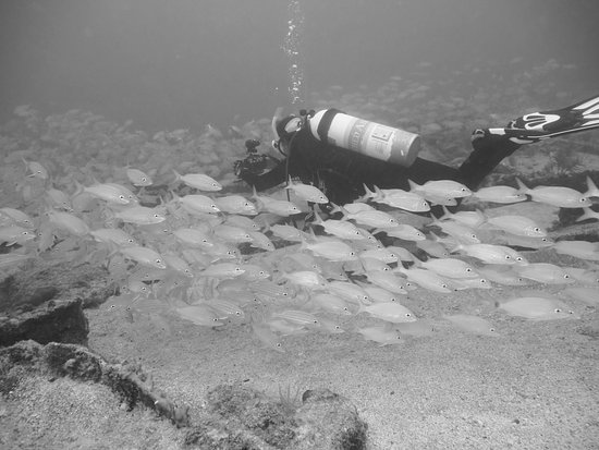Tavernier, Floryda: School of fish on shallow wreck