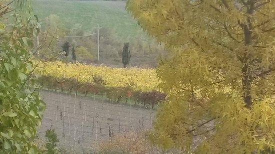 Monteveglio, İtalya: Vigneto in novembre