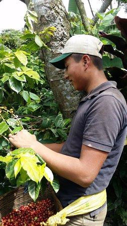 San Ramon, Nicaragua: Coffee cooperative, El Roblar
