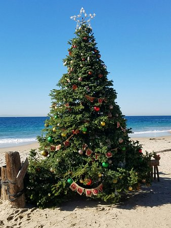 Christmas Tree Outside.Christmas Tree Outside Of Restaurant Crystal Cove Picture