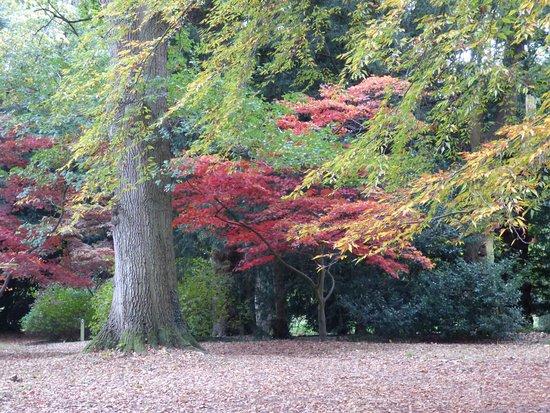 Bedale, UK: Autumn colour