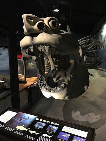 Solomons, MD: Carcharadon Megalodon mock-up skeleton (if it had a skeleton and wasn't cartilage.