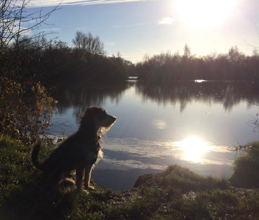 Bodenham, UK: Beautiful crisp walk at the lake