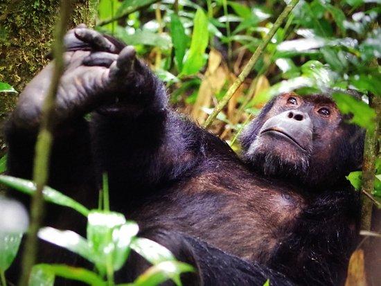 Kasese, Uganda: photo6.jpg