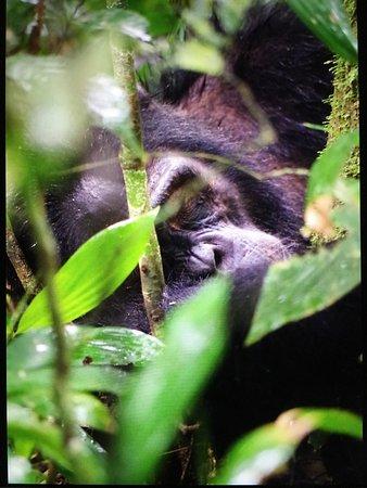 Kasese, Uganda: photo7.jpg