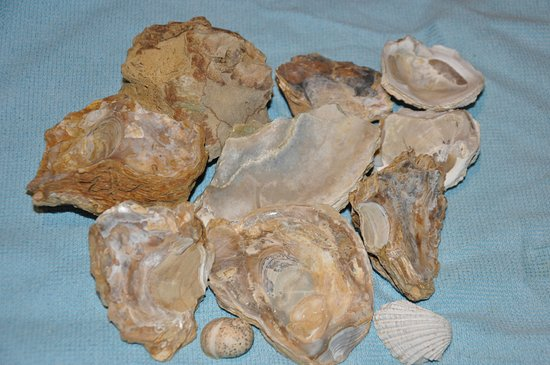 Vinchio, Włochy: I Fossili nella sabbia