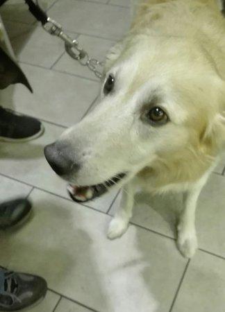 Poggio a Caiano, Italia: Il mio cane Miele, mi sta adorando, ma solo un pochino di cialda gli è stato permesso