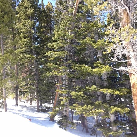 Centennial, WY: Evergreen trees flanking Calamity