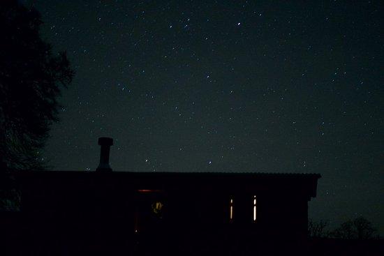 Bellingham, UK: Bramble after dark