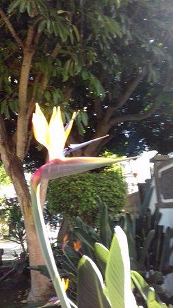 Фиргас, Испания: bird of paradice