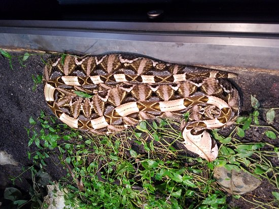 Cape Fear Serpentarium: 20160603_122321_large.jpg