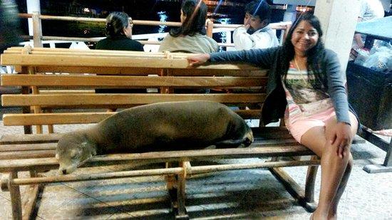 Santa Cruz, Ecuador: C360_2016-11-19-21-43-37-571_large.jpg