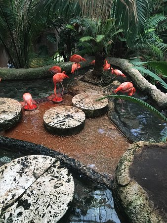 Dallas World Aquarium: photo0.jpg