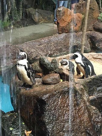 Dallas World Aquarium: photo3.jpg