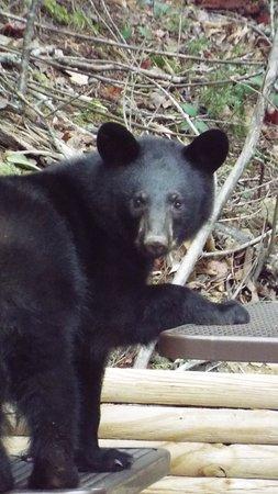 Cosby, TN : The fire woke up the bears