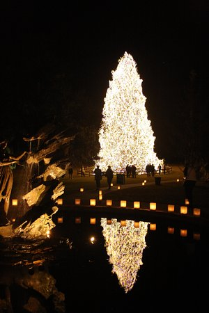 Murrells Inlet, SC: 75Ftt Christmas Tree