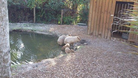 Clewiston, FL: Zoo animals