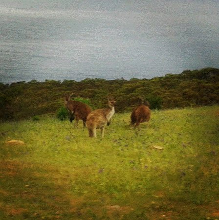 McLaren Vale, Australia: Spotting the local wildlife