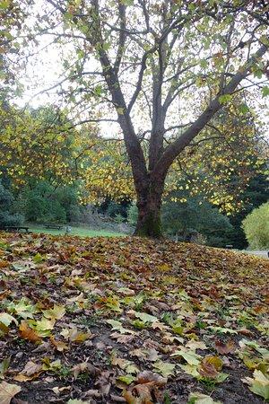 Oakland, كاليفورنيا: foliage at fern dell campsite