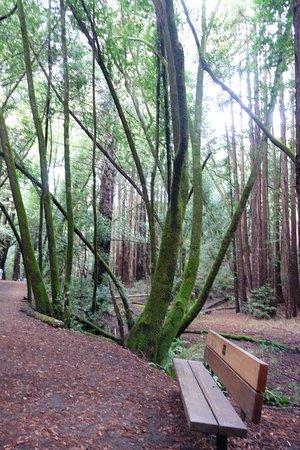Окланд, Калифорния: stream trail