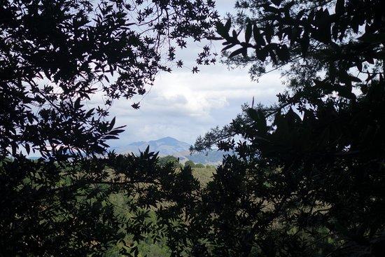 Окланд, Калифорния: view from fern trail