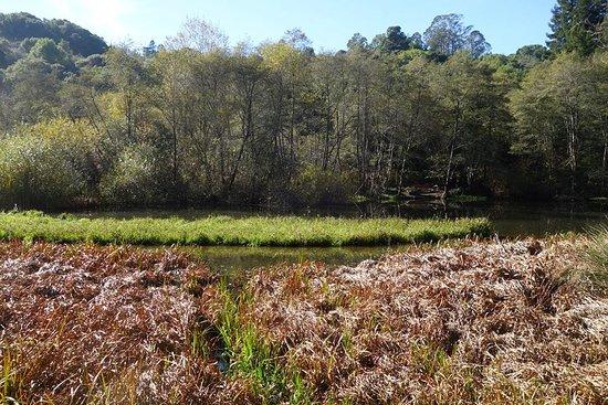 Berkeley, Californië: Wildcat Creek Trail up to Jewel Lake