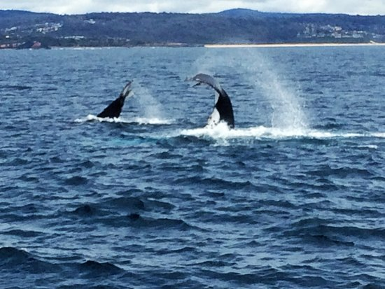 Merimbula, Australia: Double the fun