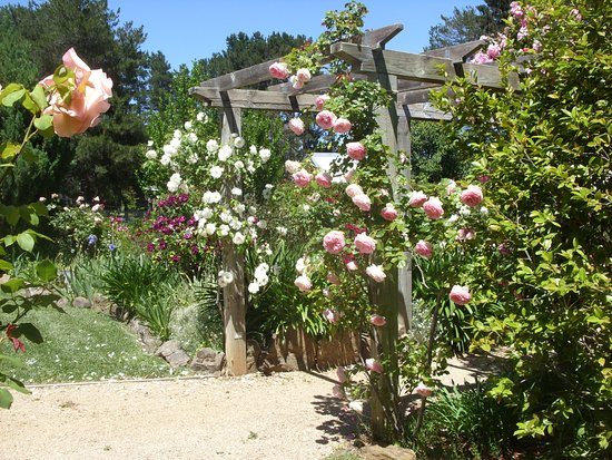 The Rose Scented Garden and Tea Room