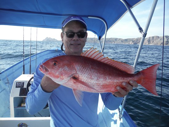 The dinner picture of mijito sport fishing loreto for Baja california fishing