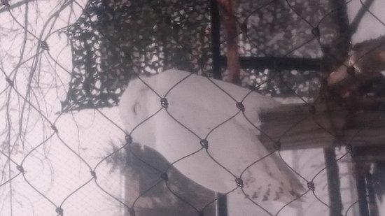 Asahiyama Zoo: DSC_0615_large.jpg
