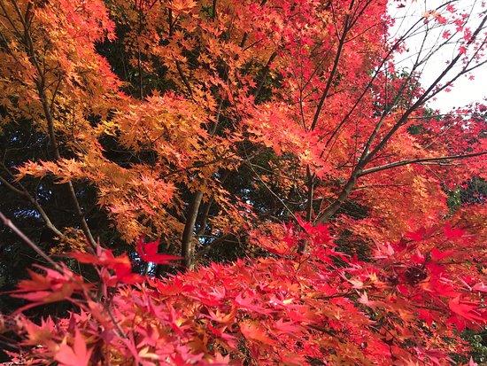 Kora-cho, Japan: photo1.jpg