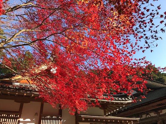 Kora-cho, Japan: photo2.jpg