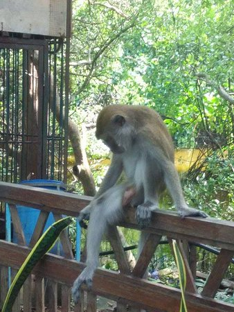 Wisata Alam Mangrove Pantai Indah Kapuk Picture Of
