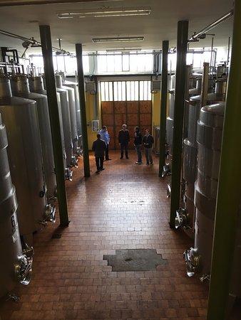 Castiglione Falletto, Italia: Fermentation tanks