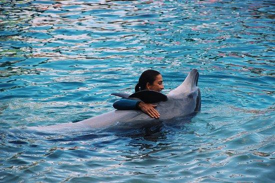 Main Beach, Australië: Dolphin show