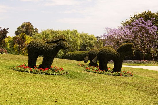 Pokolbin, Australien: Topiary animals