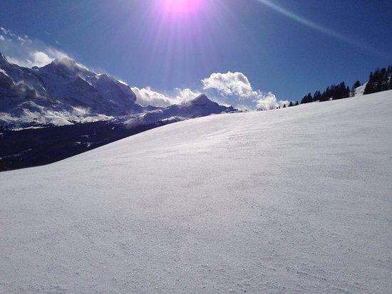 Grindelwald, Switzerland: Bussalp la magnifique!