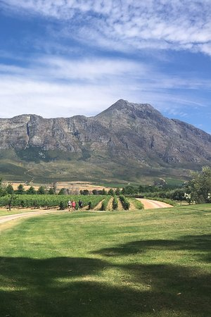 Saronsberg Vineyard Cottages: View