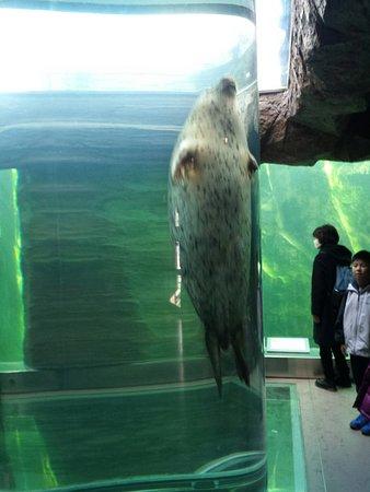 Asahiyama Zoo: 1480743390156_large.jpg