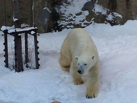 Asahiyama Zoo: 1480743423228_large.jpg