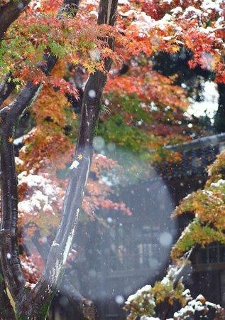 Matsudo, Japan: photo0.jpg