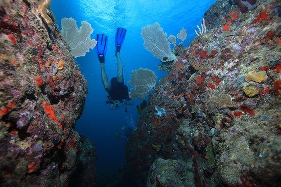 Bouillante, Guadeloupe: reef
